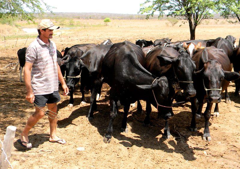 Agricultor_Francisco_Haliston_acompanha_as_vacas_leiteiras_-_Img._Crisanto_Teixeira