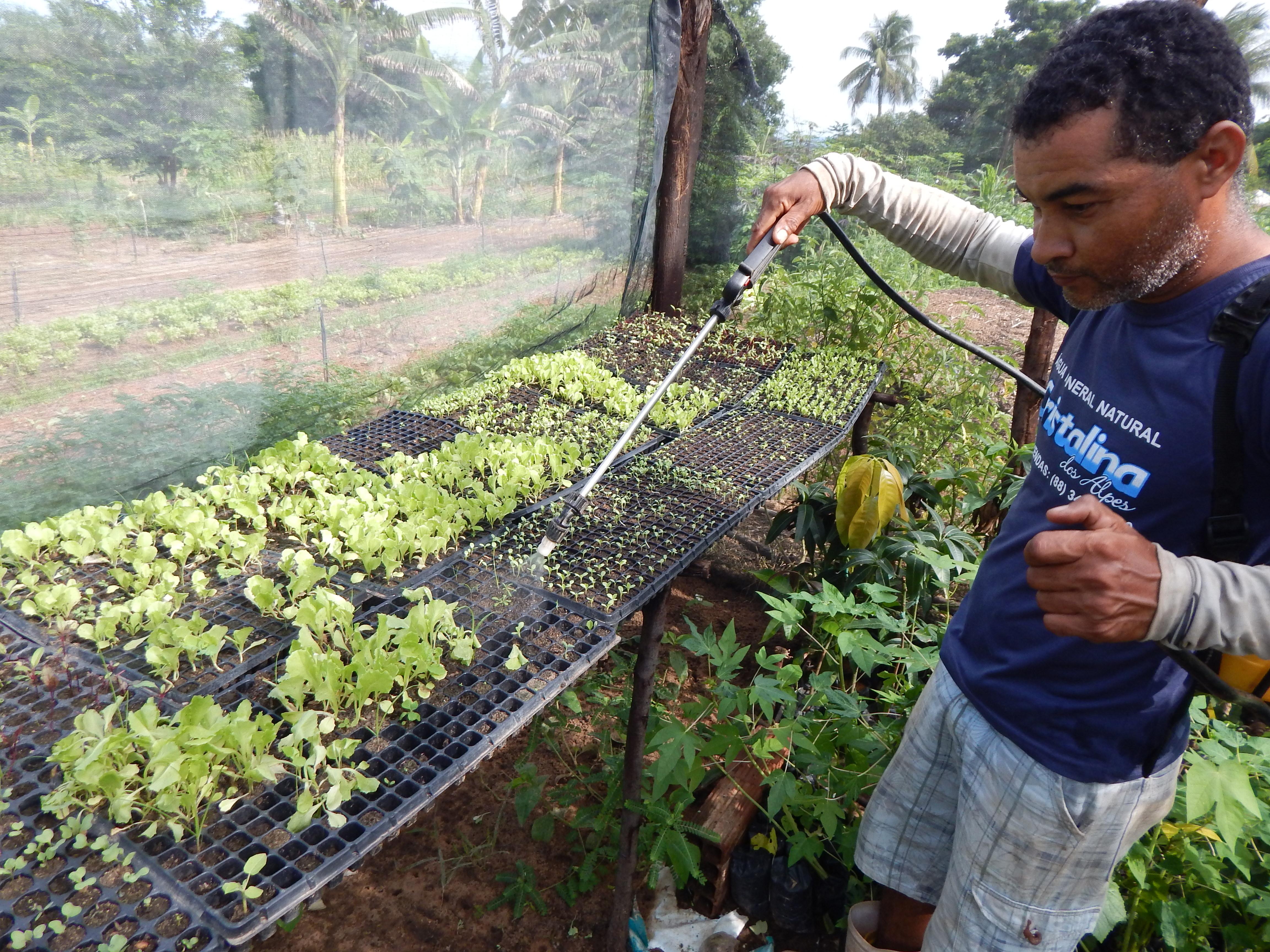 Produtores no Cariri combatem lagarta do milho com Bioinseticida Bt