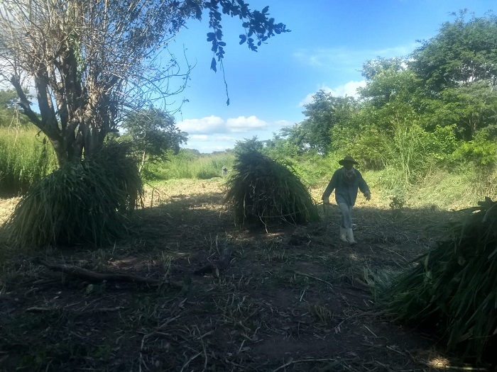 NIT: Comunidade Serraria/Cedro inicia ensilagem de capineira