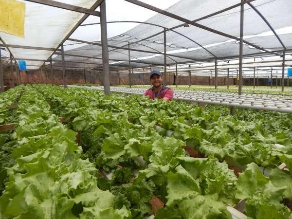 BNB anuncia Plano Safra 2020/2021 e Ceará ficará com R$453 mi para agricultura familiar