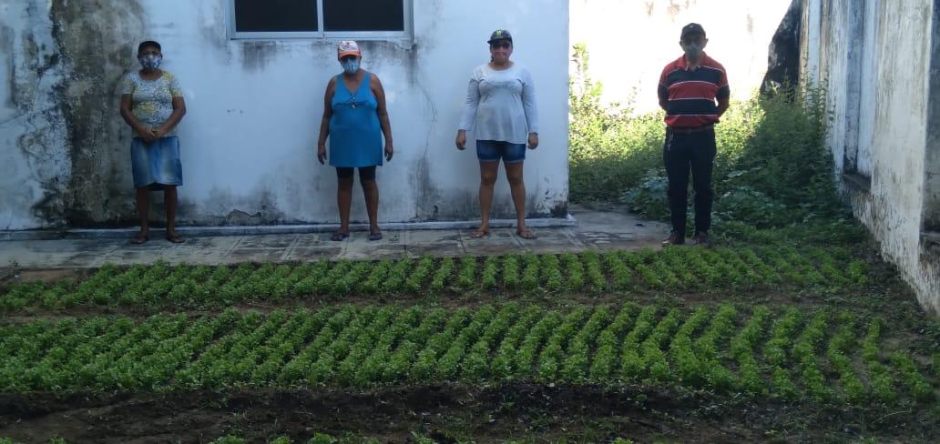 Milagres-CE: Ematerce cede área em escritório para plantio de hortaliças