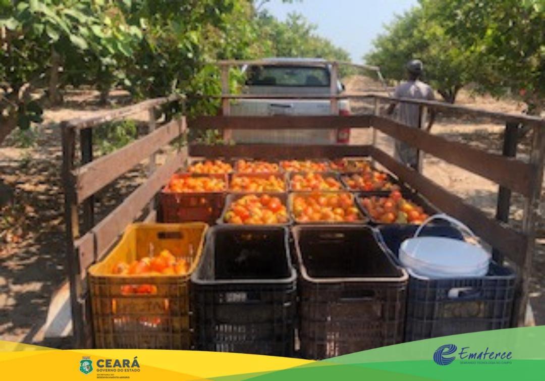 Beberibe-CE: Ematerce assiste produtores de caju e de cajuína